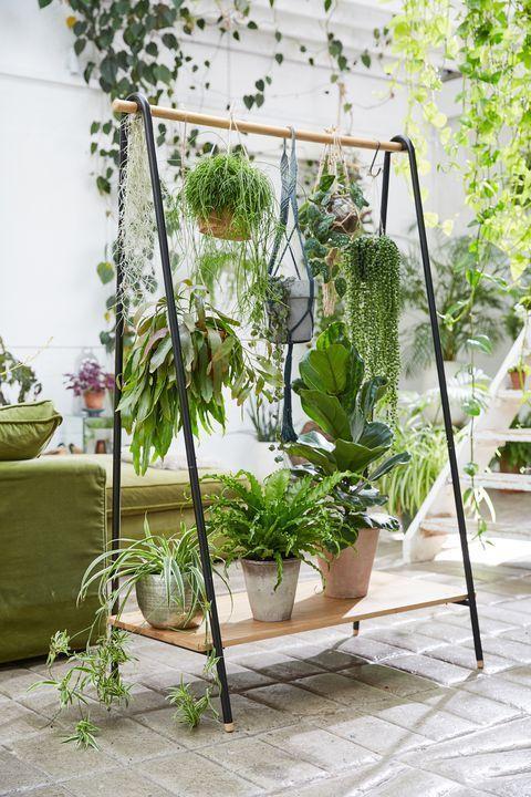 les plantes salon