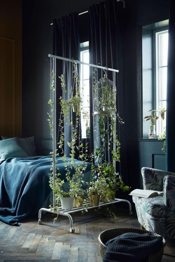 les plantes chambre